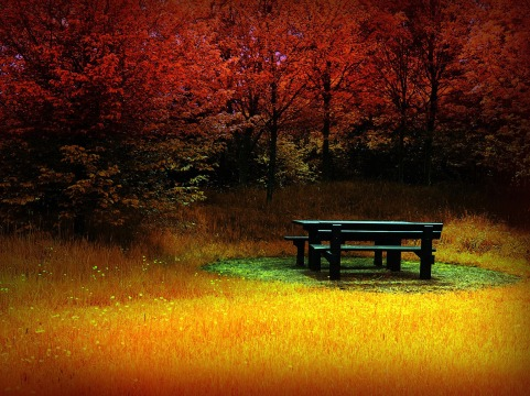 Autumn meet me at the table