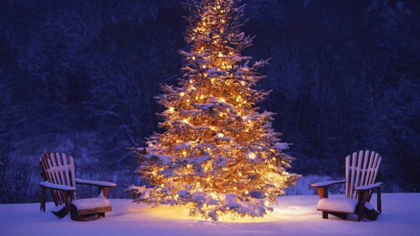 outdoor-christmas-tree-1